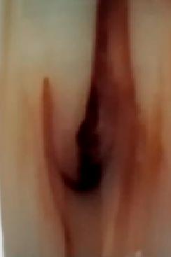 marfil-marron